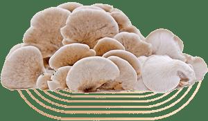 Tarragon Oyster Mushrooms